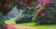 Garden inspiration (Tuin) / Everything inspiring to me concerning garden and outdoors.