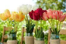 Easter & Spring / Húsvét &Tavasz