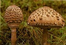 Produção de Cogumelos
