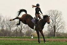 Horses & Riding /