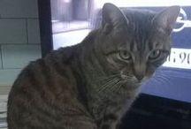GATTO.......AMORE MIO / Immagini feline..... :)