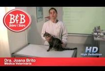Como tratar de gatos