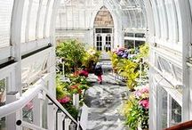Green Glasshouse