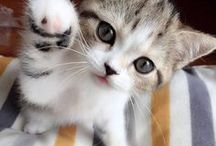 Cute Cats&KKKittens / Cats Funny ● Lovely Kittens ● Cute ● Can you give me a little dried fish?