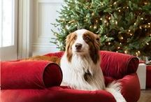 Holiday Pet Parade / Furry friends enjoying the holidays. / by Balsam Hill