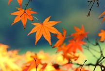 """Autumn / """"There is a harmony in autumn, and a luster in its sky, which through the summer is not heard or seen, as if it could not be, as if it had not been!""""  ~Percy Shelley   / by Susan Blakey"""