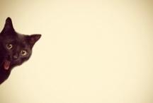 Kitty Love / by Prerana Singh