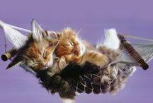 Cats / by DiAnna Reisinger