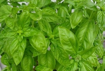 Herbs - Basil / by Patch Planters