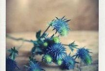 Fleur | Chardon Bleu / Un mariage avec une note champêtre grâce au chardon bleu