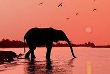 Animals <3 / by Abby Goetz