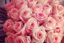 La vie en rose... / by Laitdamande Jenni