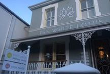 The White Lotus Wellness Centre: Inspiration board / Natural Health Centre with Victorian features, Scandinavian/midcentury decor, organic elements.