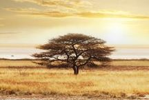 Botswana / Luxury safaris in Botswana. For more info visit > http://www.journeysbydesign.com/