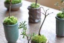 Inside Gardens / With Fall happening here in the Northeast, plant lovers like myself have no choice but to focus on gardens inside! I am currently working on a Terrarium, this board is focused on inside foliage and design inspiration!