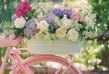 ❁ SUMMER & FLOWERS | PLANTS ❁