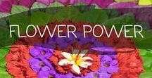 ~ FLOWER POWER ~ / Maria loves flowers. Here are beautiful and colourful flowers from around the world!