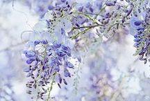 Colors of Summer / Misty & tender