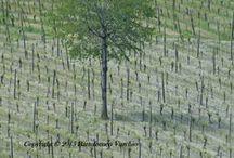 Nature / Photo on nature, Bartolomeo Vurchio