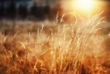 Sunshine's tenderness