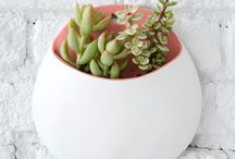Plants/Succulents/Flowers / Cute little plants