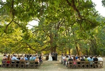 Weddings Under the Oaks