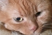 Gatos / gatos cats