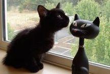 kitty stuff