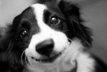 dogs/ köpekler