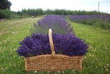 ♥♥♥ Miluji Provence ♥♥♥ / .....jednou se tam určitě vrátím!....