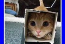 Cats in Boxes Collection / Cute but daft pictures of cats in boxes, because I can !