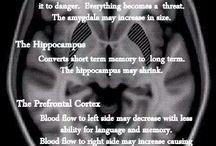 Our Brains, etc.