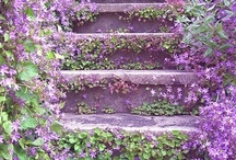 steps / I love steps...for the wonder that you may find at the top to the creativity they allow....