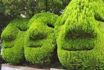 Crazy Gardens