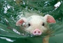 Swim / by Sloan Nota
