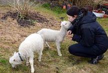 Muutosmuotoilu - Nuolniemen lammastarhat - Matkailutoiminnan konseptointi ja tuotteistaminen / Eteläsavolaisen Seppälän tilan - Nuolniemen lammastarhojen maatilamatkailutoiminnan tuotteistaminen ja tilan pihapiirin ehostus. Konsepti käsittää tilan palveluiden muotoilemisen suomalaisesta maalaiselämästä kumpuavaksi elämystuotteeksi. Se sisältää kyläkaupan ja pihapiirin suunnittelun sekä selvityksen tilan ympäristön hyödyntämisestä palveluissa, maatilamatkailutoiminnan palvelupakettien konseptoinnin ja tuotteistamisen sekä yrityksen visuaalisen ilmeen muotoilun.