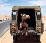 Voitures & Animaux / Entre humour et tendresse, nos amis les animaux prennent la route ! #chien #chat #voiture