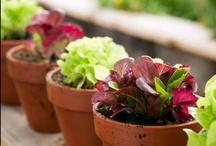 Herb & Veggie Gardening Tips and Tricks