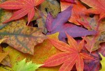 Autumn colors / We love the changing colors Autumn brings...