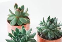13| Plantas