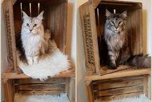 Katzen lieben Obstkisten / Eine große Auswahl an Obstkisten, Vintage-/ Shabby Chic Möbel, Truhen, tollen Accessoires und mehr findest Du hier > www.obstkisten-online.de