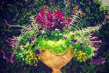 Gardensmith - Planter and Container Ideas / Pictures of planters we have created for our clients