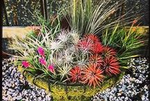 Gardensmith - airplants / Gardensmith - airplant ideas and items in our store