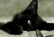 GATOS NEGROS / Son elegantes como panteras, enigmáticos y cargados de misticismo y buenas vibraciones. Porque cuando te encuentras uno, solo pueden pasarte cosas buenas, queremos celebrarlo... http://gatoscon.blogspot.com/2014/04/6-momentos-y-lugares-donde-un-gato.html