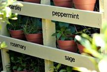 Gardening / Gardening tips and ideas for every size garden!