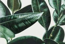 Metaphyta / Plants