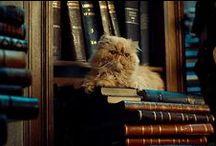 ch | Hermione Granger