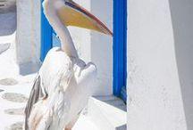 Travel >> Mykonos, Greece / Someday.