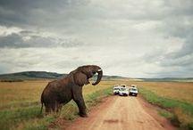 Travel >> Africa