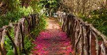 Travel >> Madeira, Portugal